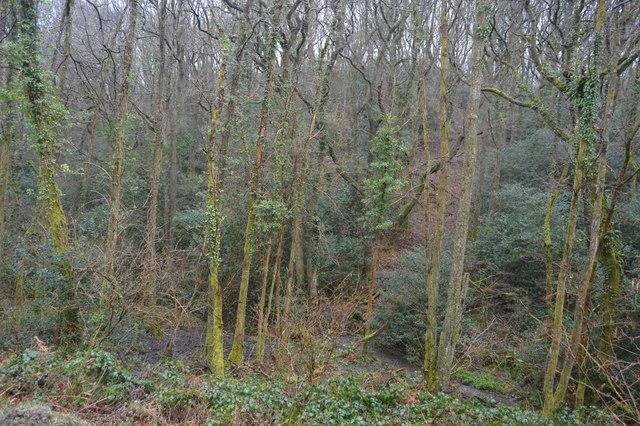 Stream. Darklake Wood
