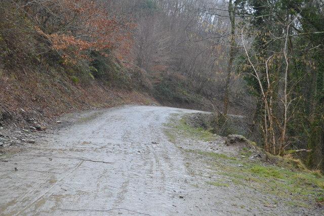 Track, Darklake Wood