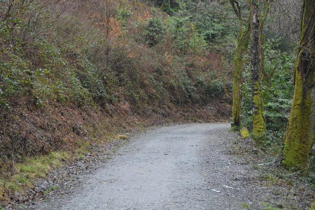 Footpath, Darklake Wood