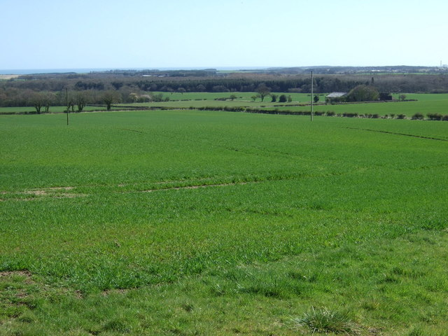Crop field near Helm