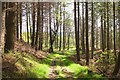 NT4328 : Track in Harehead Wood : Week 18