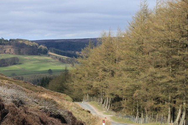 Conifer plantation, Bransdale