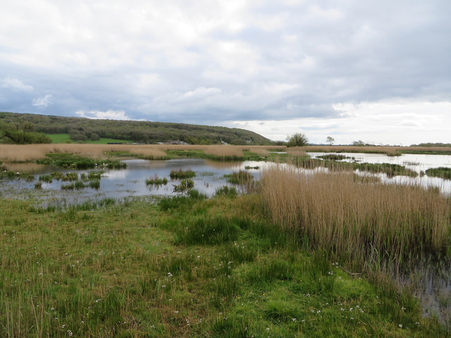 Wetland view to Grisedale Wood