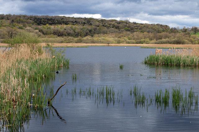 Wetland habitat, RSPB Leighton Moss