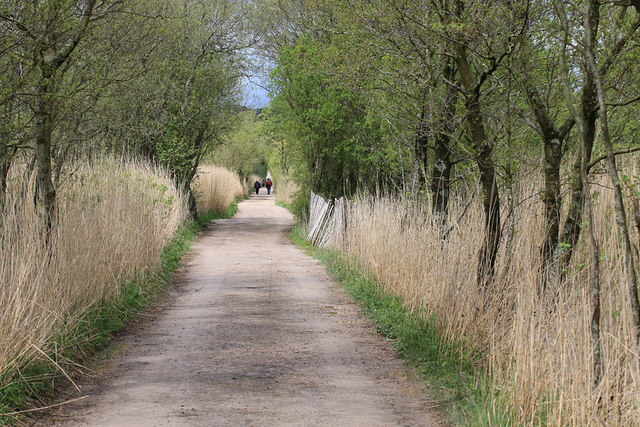 Causeway through the reedbed