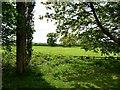 SJ7970 : Agricultural land at Jodrell Bank by Philip Platt