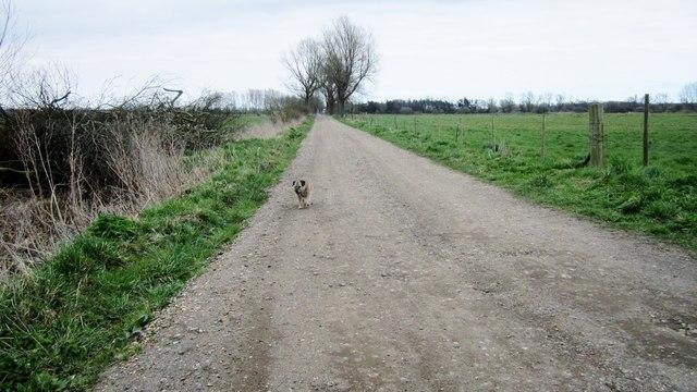 Track across Beecles Marsh