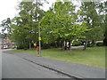 SU8462 : Trees on Abingdon Road, Sandhurst by David Howard