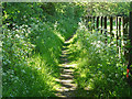 SU8971 : Footpath near Winkfield Row by Alan Hunt