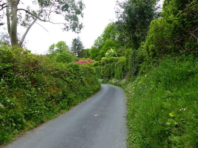Lane lined with wild flowers, Manaton, Dartmoor