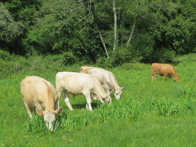 Synchronised grazing, Bradley Woods