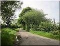 ST5163 : Row of Ashes Lane by Derek Harper