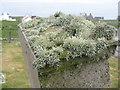 NL9841 : Lichens on a gravestone by M J Richardson