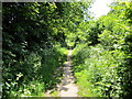 SJ5173 : Footpath at Wheeldon Copse by Jeff Buck