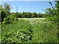 SJ5173 : Wheeldon Copse, Avanley by Jeff Buck