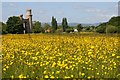 SO8842 : Buttercups and Dunstall Castle by Philip Halling