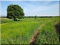 SJ5375 : A field at Newtonbank Farm by Jeff Buck