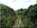 SW8837 : Coastal track by David Brown