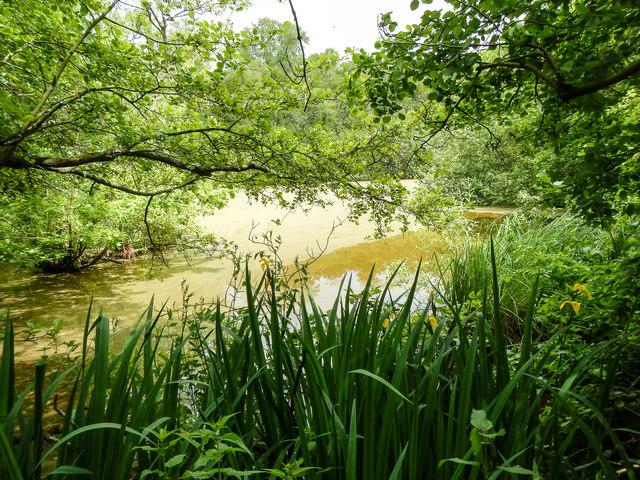 Pond, Bure Marshes NNR