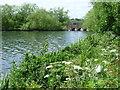 TQ2187 : Cool Oak Bridge from alongside the Brent Reservoir by Marathon