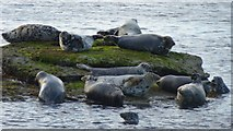 NU1344 : Seals on the rocks by DS Pugh
