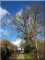 SX3973 : Lane at Lamerhooe by Derek Harper