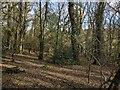 SX4073 : Slew Wood by Derek Harper