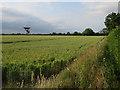 TL4053 : Radio telescope by Barton Road by Hugh Venables