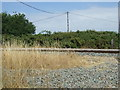 TL5782 : Ely to Norwich railway near Lot's Farm by JThomas