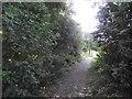 SK5607 : Lismore Walk by Tim Glover