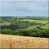 SS2415 : Farmland, Lopthorne, Cornwall by Oswald Bertram