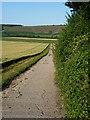 SU6621 : Farm track south of Henwood Down by Richard Law