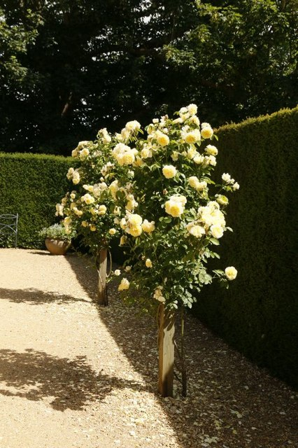 Entrance To Portland Rose Gardens : Entrance to the rose garden bill nicholls geograph