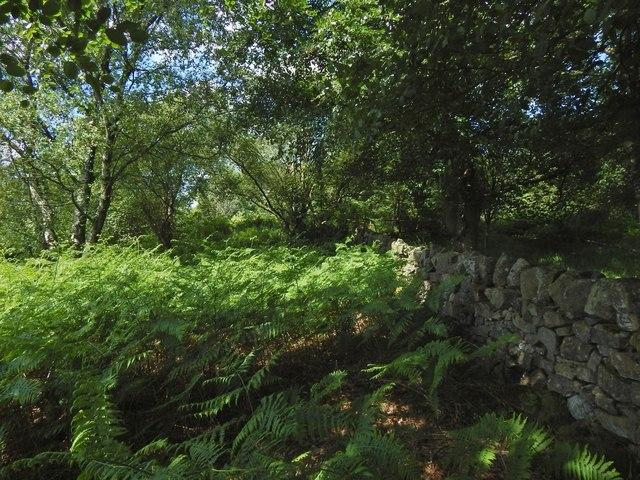 Site of the Cochno Stone