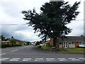 TL4575 : Glebe Way, Haddenham by Richard Humphrey