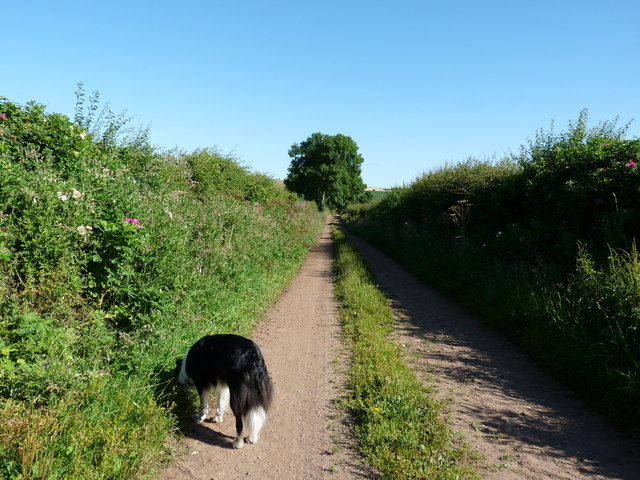Path to Auchencrow from Billiemains