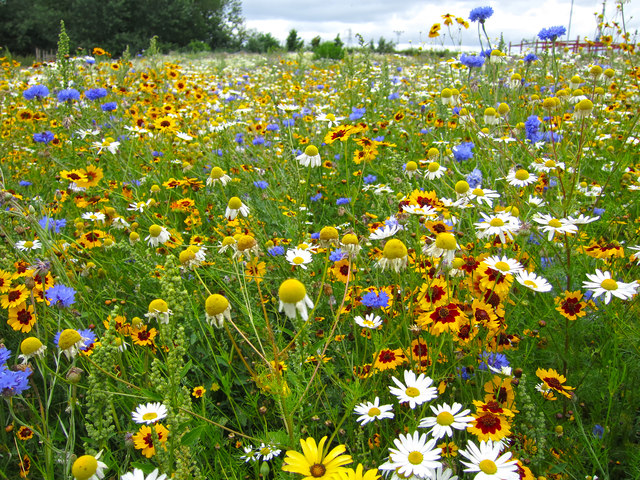 Meadow At Broadview Gardens Oast House Archive