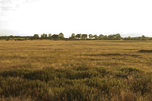 Breckland scenery from Eastmere