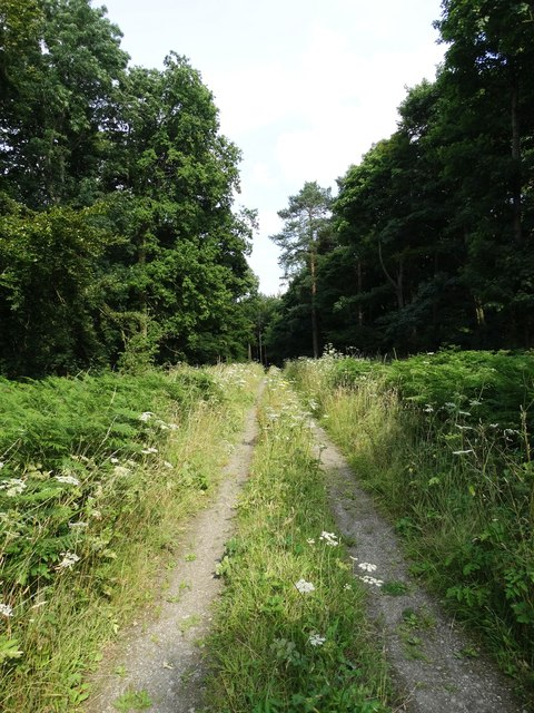 Track in Margery Wood, High Hoyland