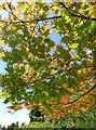 ST8590 : Westonbirt Old Arboretum : Week 32