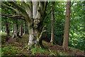 SD5754 : Hore Wood : Week 32