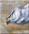 TR0567 : The hen harrier's eye : Week 32