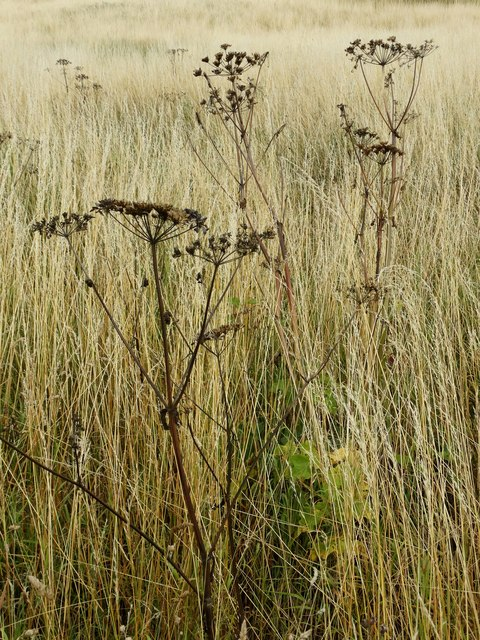 Mid summer vegetation by Thievesdale Wood