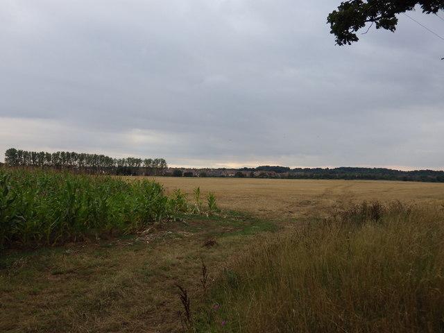 Farmland to North East of Moreton Hall, Bury St Edmunds