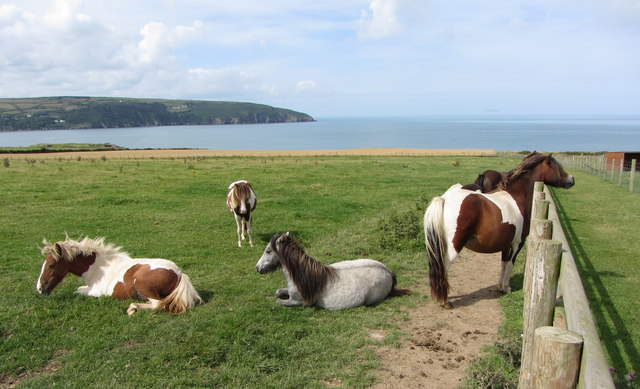 Ceredigion Island Coastal Farm Park