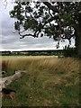 TL1243 : Greensand Ridge Walk by Dave Thompson