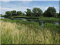 TL5370 : River Cam north of Upware by Hugh Venables