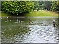 SJ3787 : The Lake, Sefton Park by David Dixon