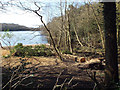 SP1098 : Tree debris at the southeast corner of Bracebridge Pool, Sutton Park by Robin Stott