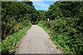 SZ5086 : Stenbury Trail towards Newport by Ian S